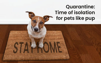 Quarantine: time of isolation for pets like pup