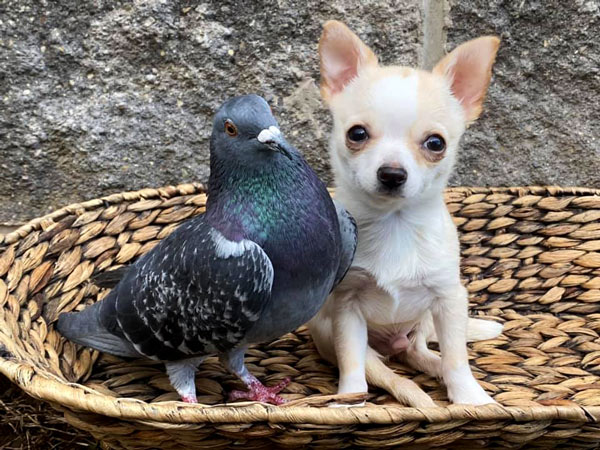 Best Friends With A Pigeon 2