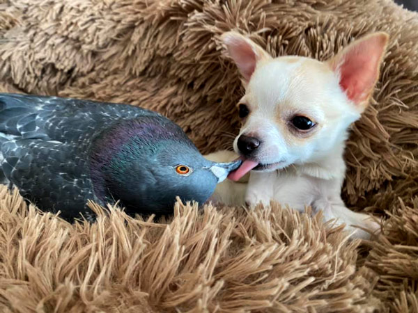 Best Friends With A Pigeon
