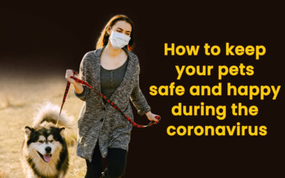 How to keep your pets safe and happy during the coronavirus quarantine