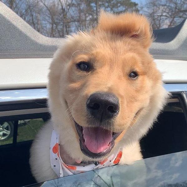 goldenunicornrae puppy Rae