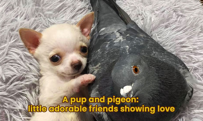 A pup and pigeon: little adorable friends showing love