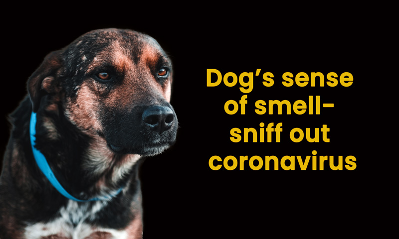 Dog's sense of smell- sniff out coronavirus