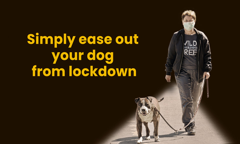 Simply ease out your dog from lockdown